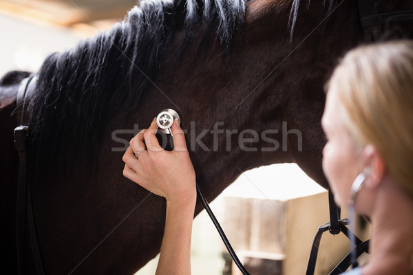 Сток-фото: женщины · ветеринар · лошади · рабочих · стабильный