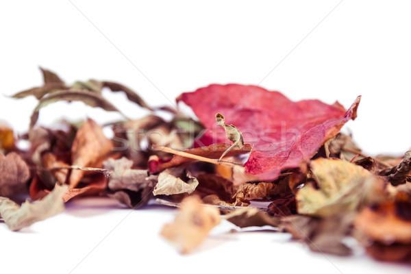 копия пространства белый природы листьев красный Сток-фото © wavebreak_media