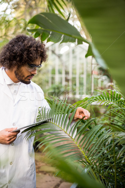 Scientifique plantes Homme Photo stock © wavebreak_media