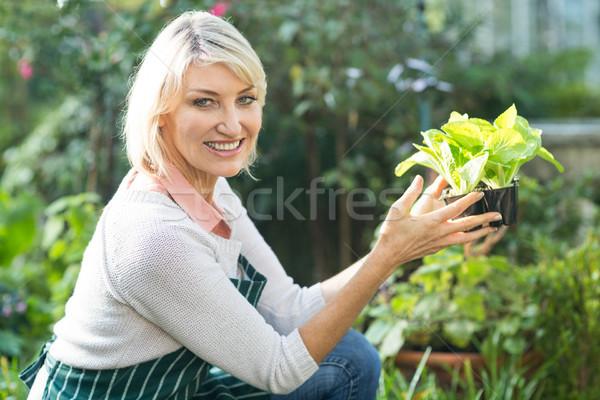女性 植木屋 肖像 作業 ストックフォト © wavebreak_media