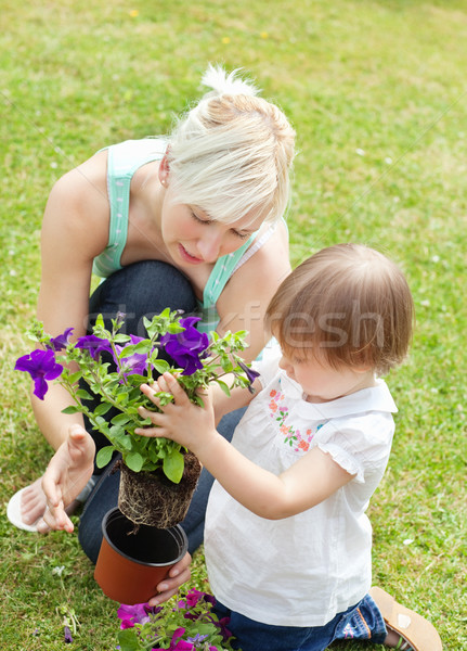 Famille usine fleurs pourpre pot à fleurs fille Photo stock © wavebreak_media