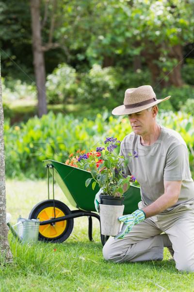 Homem maduro comprometido jardinagem vista lateral flor verão Foto stock © wavebreak_media