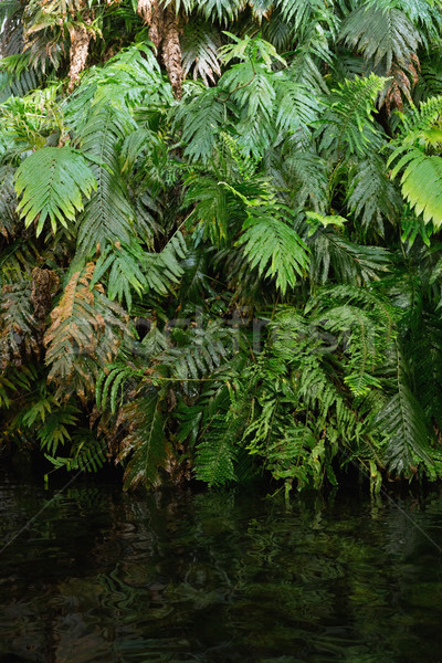 Green ferns in tropical forest Stock photo © wavebreak_media