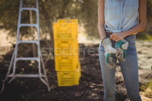 Mid section of woman wearing gloves on field at olive farm Stock photo © wavebreak_media