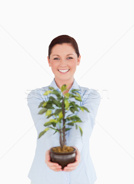 Good looking red-haired female holding a houseplant while standing on a white background Stock photo © wavebreak_media