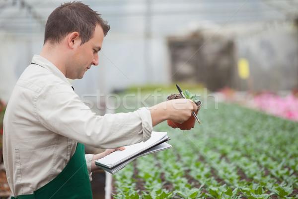 Férfi áll üvegház faiskola jegyzetel kezek Stock fotó © wavebreak_media