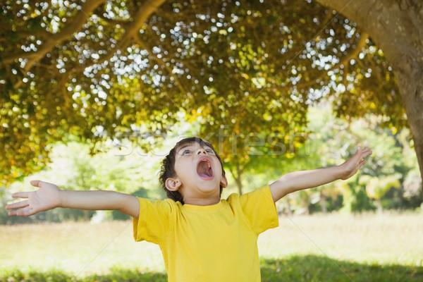 Fiú karok felfelé néz park fiatal srác gyermek Stock fotó © wavebreak_media