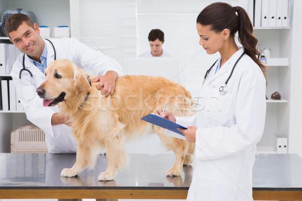 Zdjęcia stock: Lekarz · weterynarii · psa · medycznych · biuro