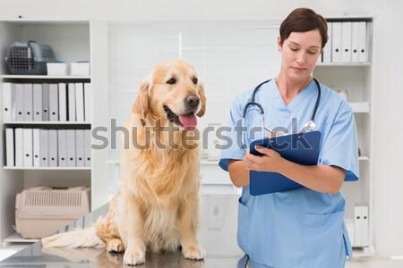 Uśmiechnięty lekarz weterynarii cute psa medycznych Zdjęcia stock © wavebreak_media