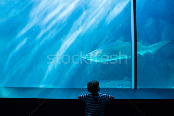 Young man looking at a shark in a tank Stock photo © wavebreak_media
