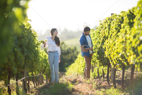 Man and woman standing by plants at vineyard Stock photo © wavebreak_media