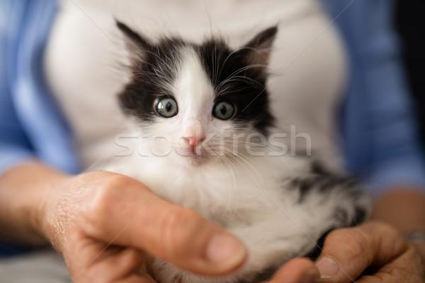 Close-up portrait of cute kitten held by senior woman Stock photo © wavebreak_media