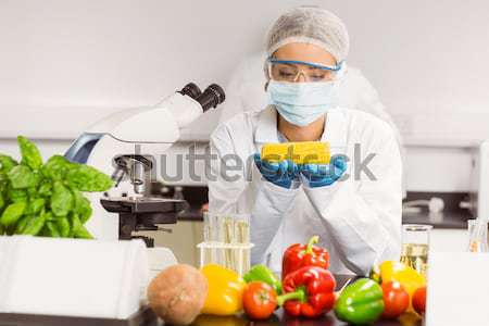 Food scientist looking at corn cob Stock photo © wavebreak_media