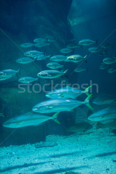 Fish swimming in tank Stock photo © wavebreak_media