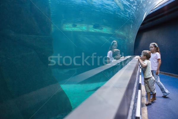 Foto stock: Pequeno · irmãos · olhando · peixe · tanque · aquário