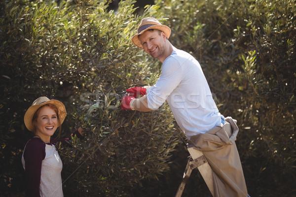 молодым человеком оливками женщину фермы улыбаясь природы Сток-фото © wavebreak_media