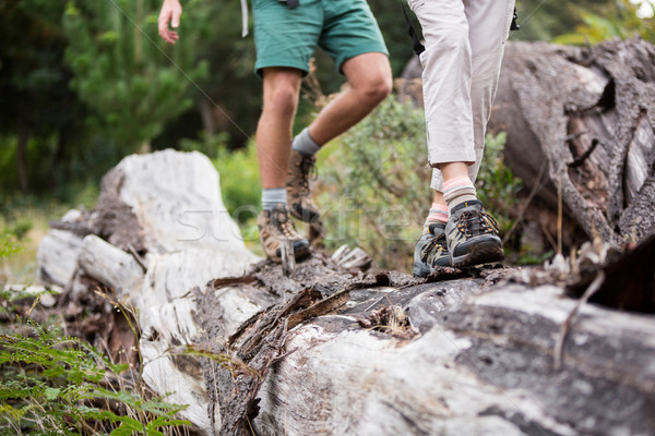 Hiker couple walking on tree trunk Stock photo © wavebreak_media