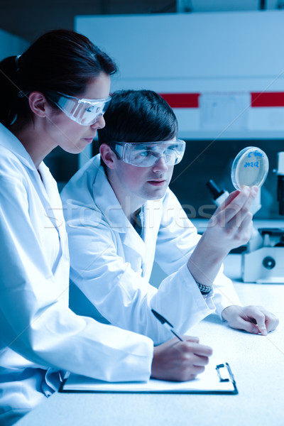 Ritratto scienziati guardando piatto laboratorio carta Foto d'archivio © wavebreak_media