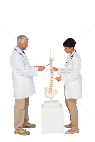 Side view of two doctors pointing at skeleton model Stock photo © wavebreak_media