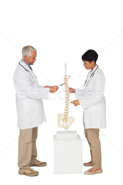 Foto stock: Vista · lateral · dois · médicos · indicação · esqueleto · modelo