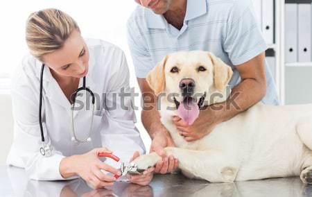 Mosolyog állatorvos kutyakölyök asztal nő kutya Stock fotó © wavebreak_media