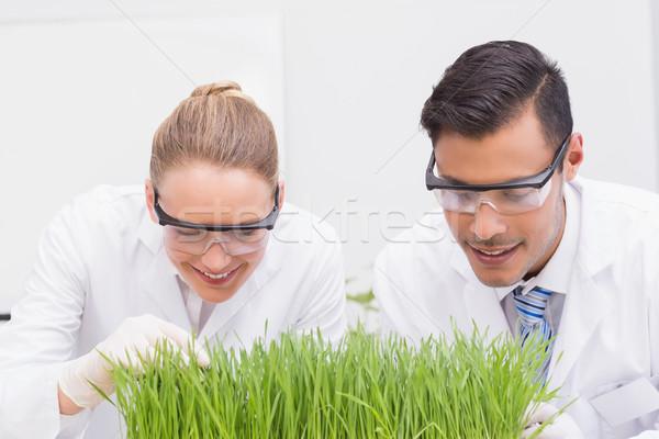 Scientists examining plants  Stock photo © wavebreak_media