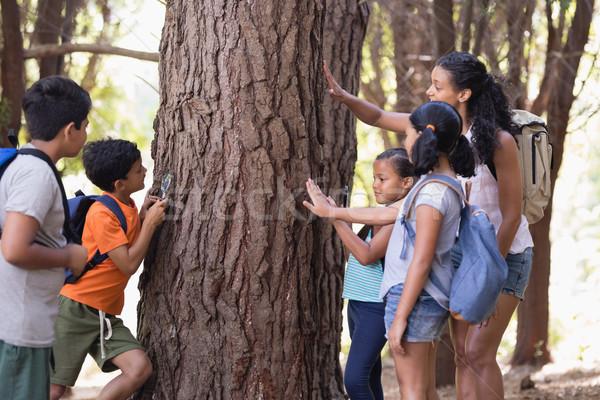 Teacher and children touching tree trunk in forest Stock photo © wavebreak_media