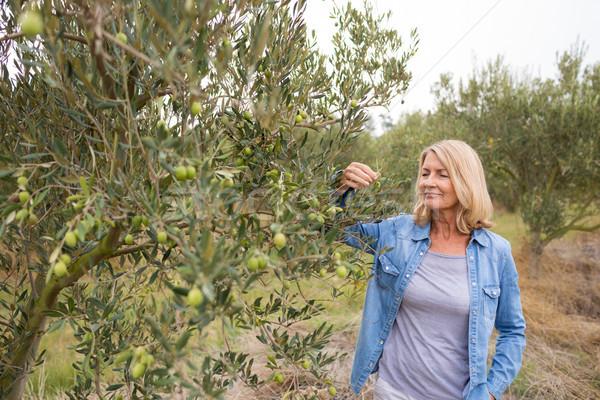 женщины фермер дерево оливками фермы женщину Сток-фото © wavebreak_media