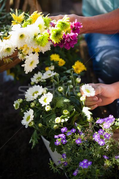 Senior donna pronipote fiori immagine Foto d'archivio © wavebreak_media