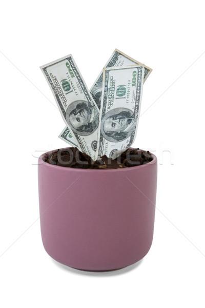Pénz növekvő edény növény fehér üzlet Stock fotó © wavebreak_media