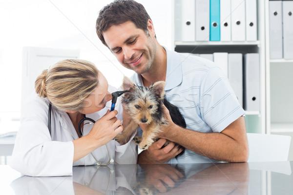 ветеринар уха щенков женщины человека Сток-фото © wavebreak_media
