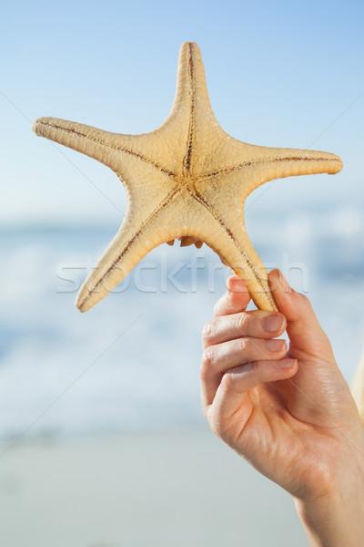 Woman holding starfish on the beach Stock photo © wavebreak_media