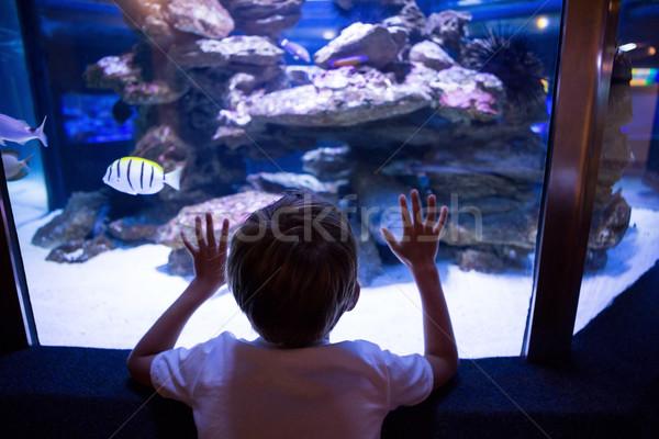 Moço tocante aquário atrás câmera peixe Foto stock © wavebreak_media