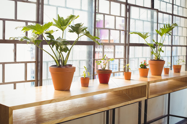 Stock photo: Close up view of flowerpots in a line