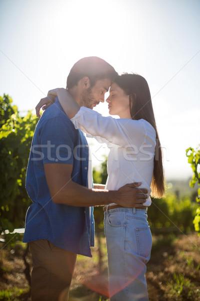 Постоянный виноградник небе вид сбоку Сток-фото © wavebreak_media