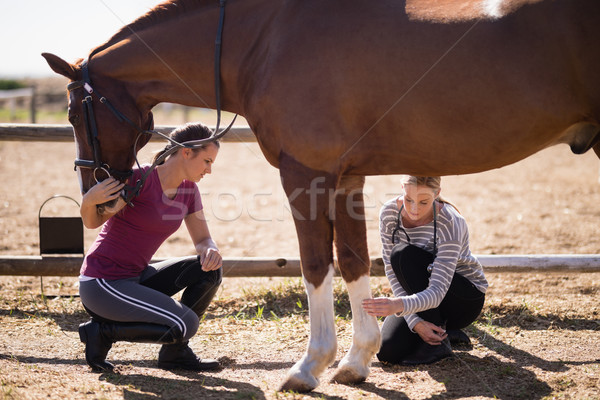 Vrouwelijke dierenarts vrouw naar paard been Stockfoto © wavebreak_media