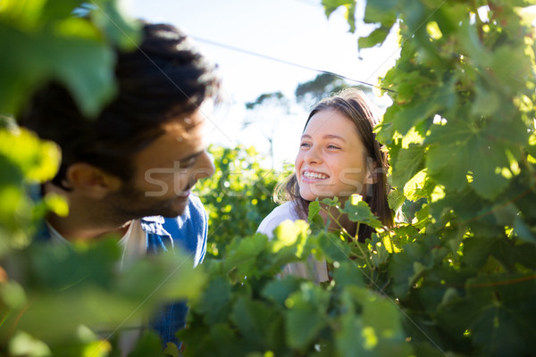Happy couple seen through plants at vineyard Stock photo © wavebreak_media