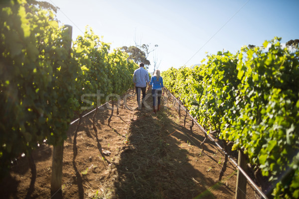 Casal caminhada plantas vinha Foto stock © wavebreak_media