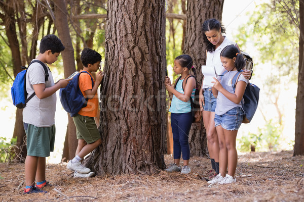 Students examining tree trunk with teacher in forest Stock photo © wavebreak_media