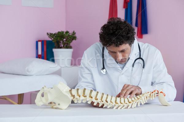 Megvizsgál gerincoszlop modell klinika férfi orvosi Stock fotó © wavebreak_media