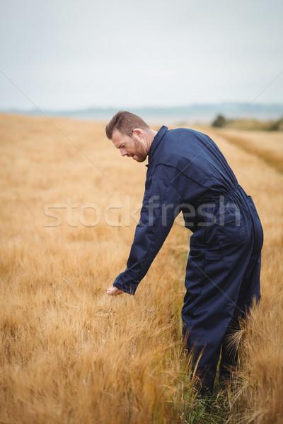 фермер зерновые области собака человека природы Сток-фото © wavebreak_media
