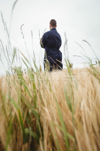 Rear view farmer standing with arms crossed in the field Stock photo © wavebreak_media