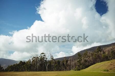 Ver paisagem blue sky primavera grama fitness Foto stock © wavebreak_media