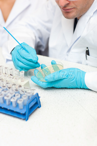 Stock photo: Caucasian male scientist holding samples in his laboratory