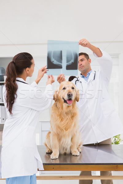 Dierenarts collega onderzoeken honden Xray medische Stockfoto © wavebreak_media