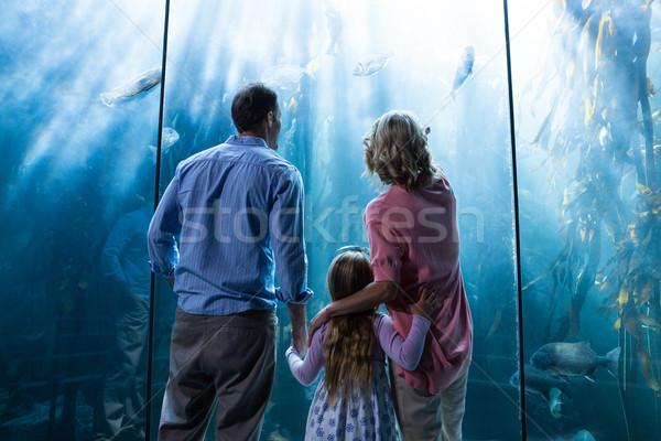 Naar vis tank aquarium man natuur Stockfoto © wavebreak_media