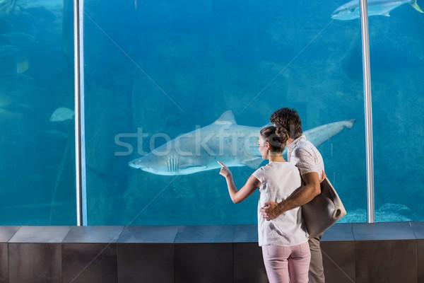 Stock fotó: Boldog · pár · néz · cápa · akvárium · férfi