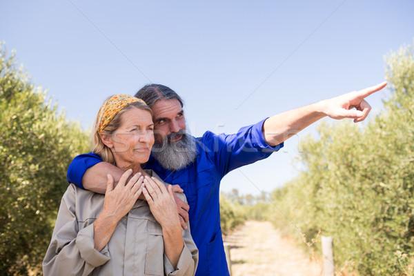 пару указывая расстояние оливкового фермы Сток-фото © wavebreak_media