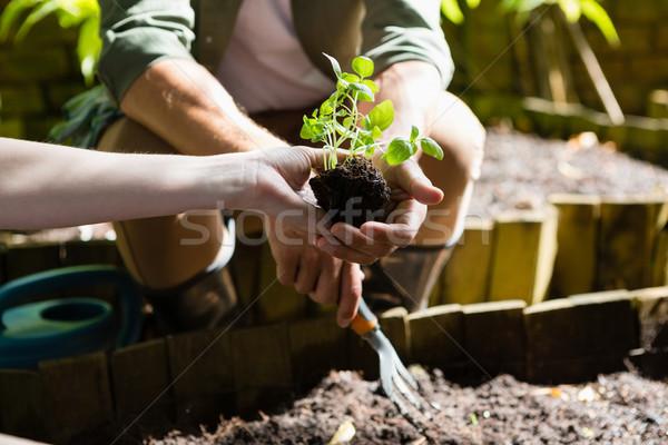 Pár ültet fiatal növény föld középső rész Stock fotó © wavebreak_media