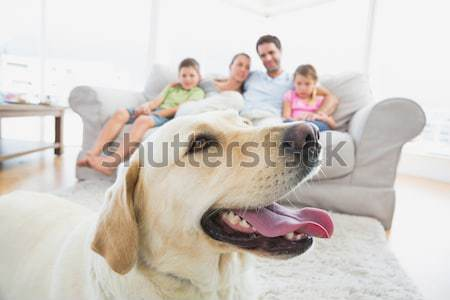 Mutlu aile oturma kanepe evcil hayvan sarı Labrador Stok fotoğraf © wavebreak_media